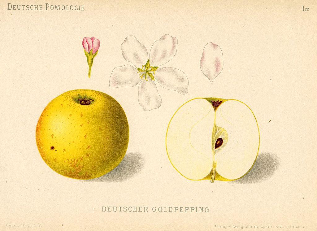 Deutscher Gold-Pepping