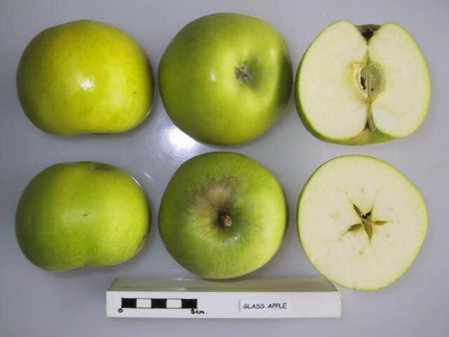 Snell's Glass Apple