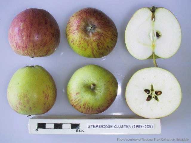 Stembridge Cluster