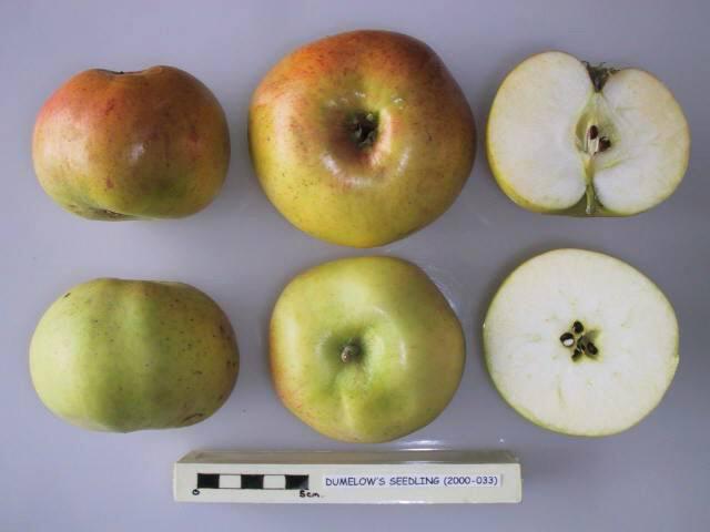 Dumelow's Seedling