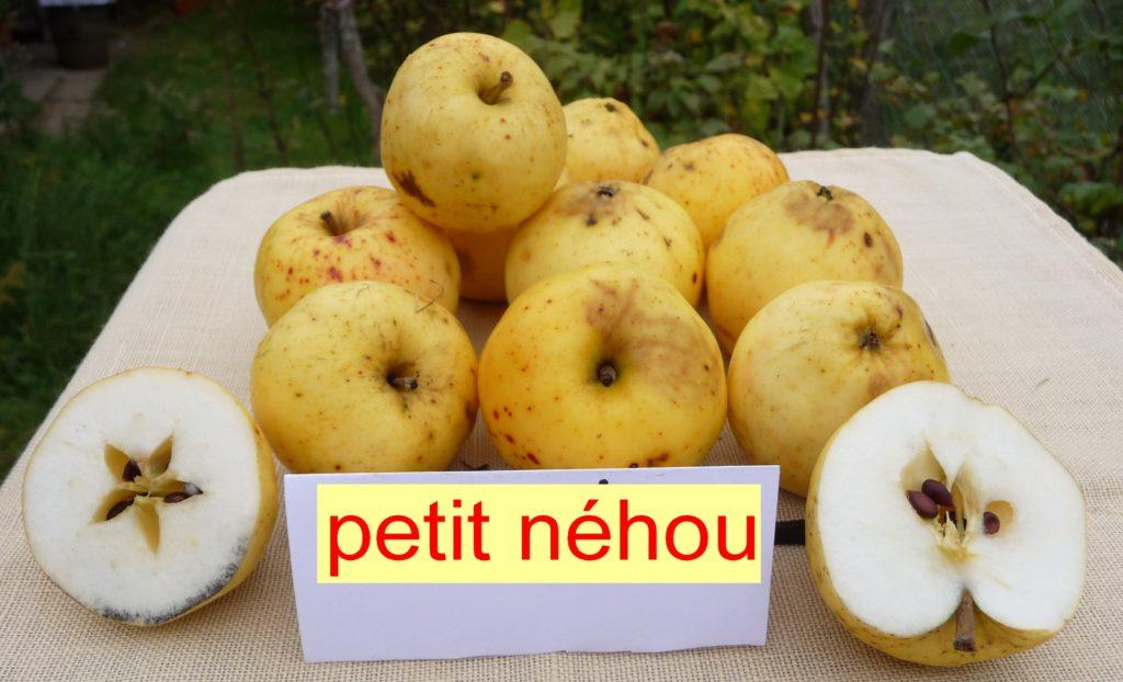 Petit Néhou